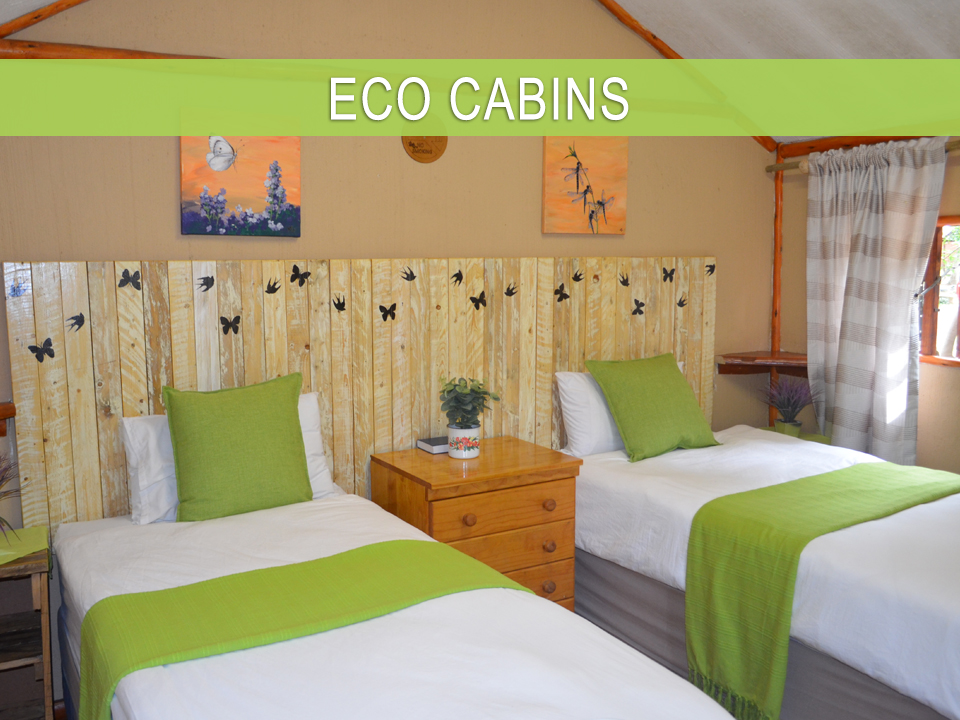 Bluff Eco Park Accommodation